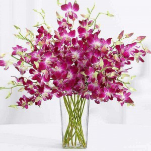 10 Stems of Beautiful Orchids